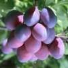 盛夏的果实
